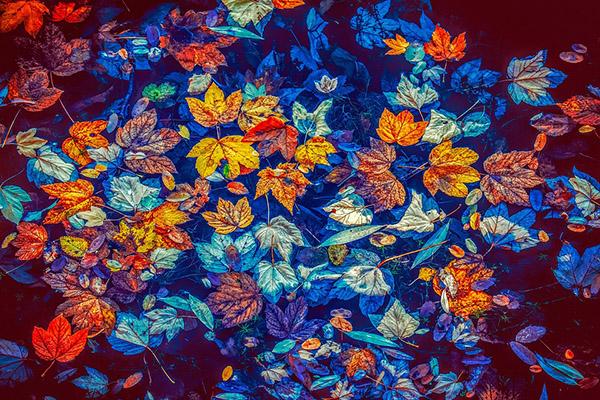 kép1_fotó_pixabax.com