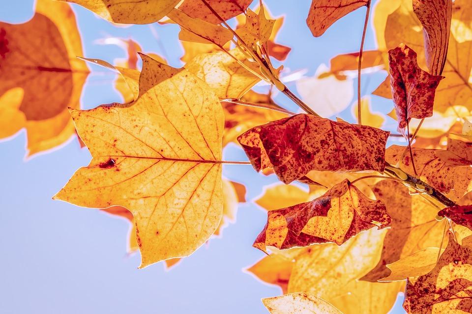 kép2_fotó_pixabax.com